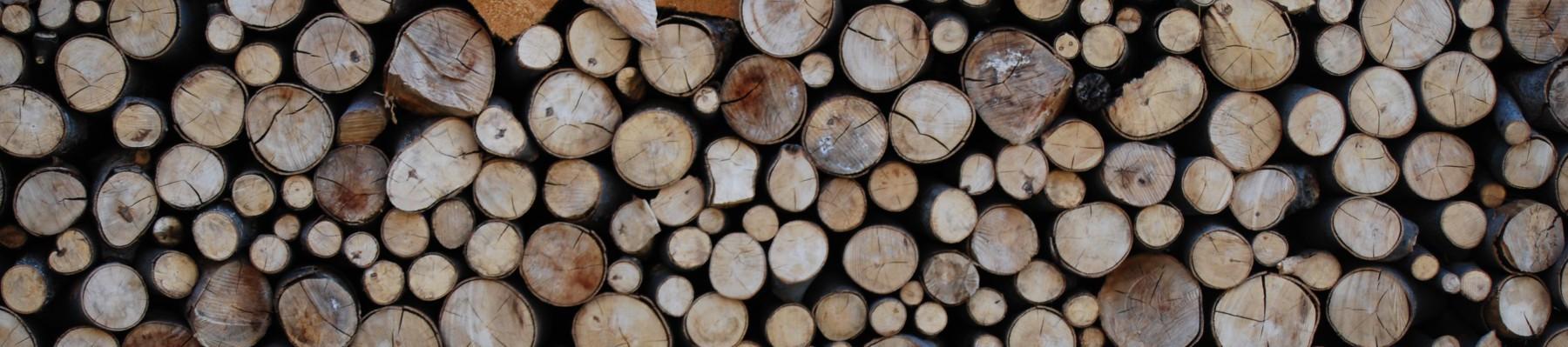 Tischlerei – Mit Holz bauen & sanieren
